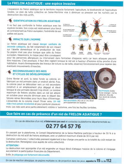 Dept76 flyer lutte contre frelon asiatique 2021 p2